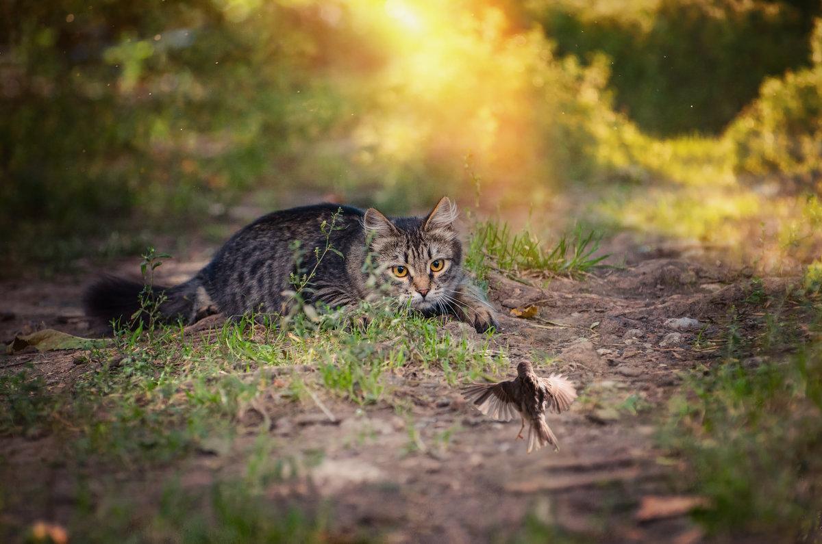 ..охота на... котов.. - Лилия .