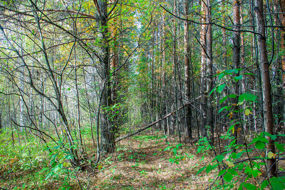 Лесной шлагбаум - Юрий Борзов