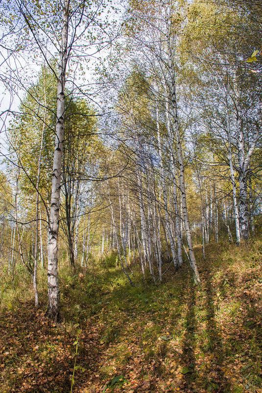 Осень - Юрий Борзов