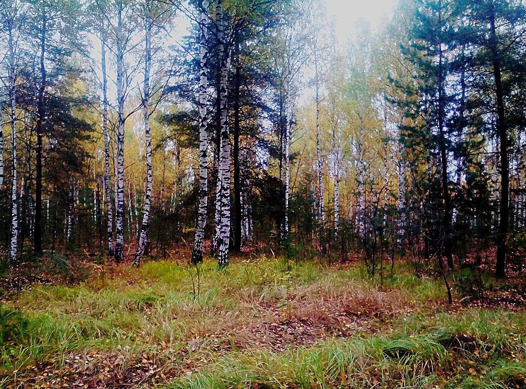 ...в осеннем лесу - александр дмитриев