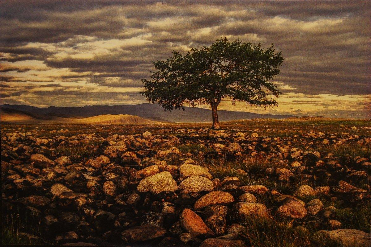 Единственная лиственница долины Юстыда. Горный Алтай. 28.07.2006 - Елена Павлова (Смолова)