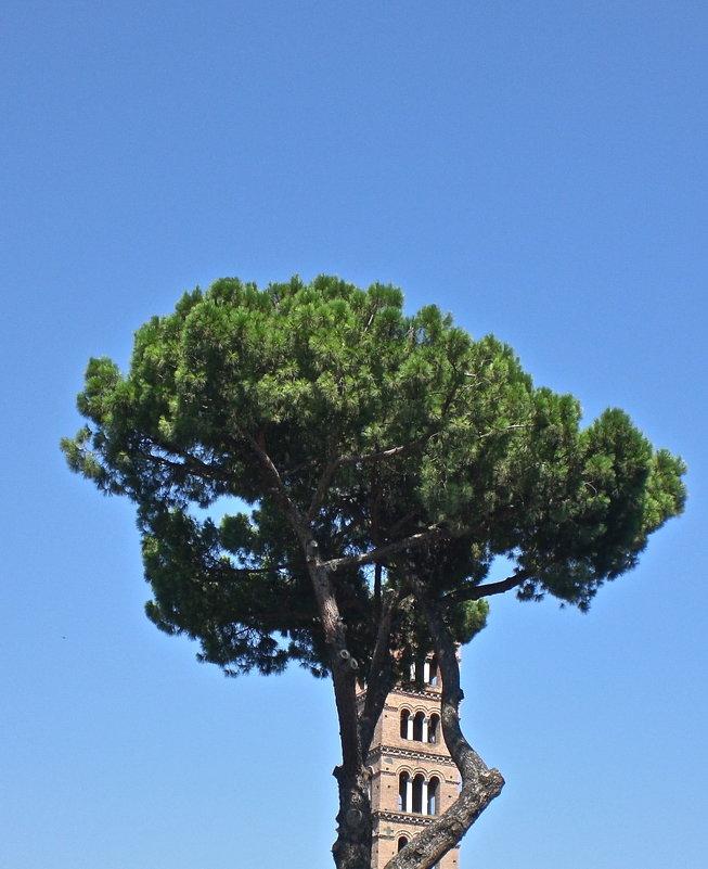 в Риме - Елена