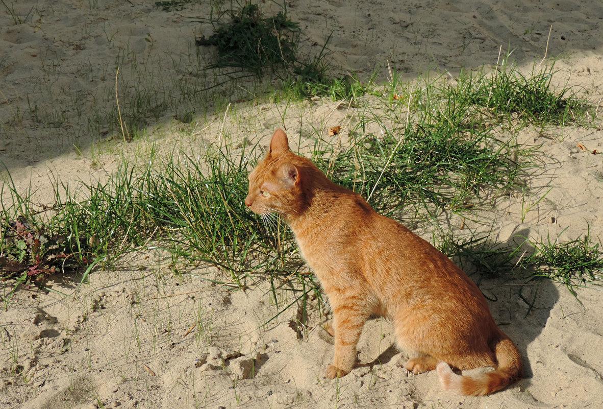 Солнечный кот греется . - bemam *