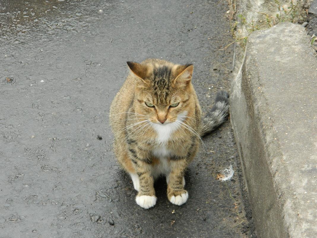 кошка - Andrew