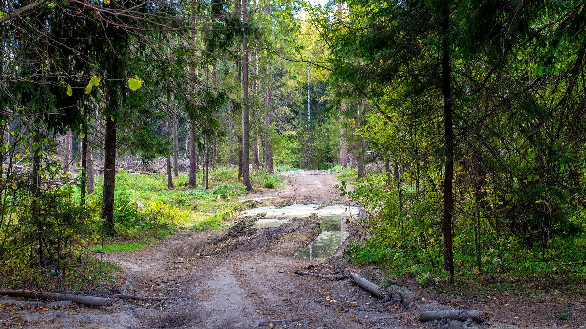 Дорога через лес - Vladimir Lazarev