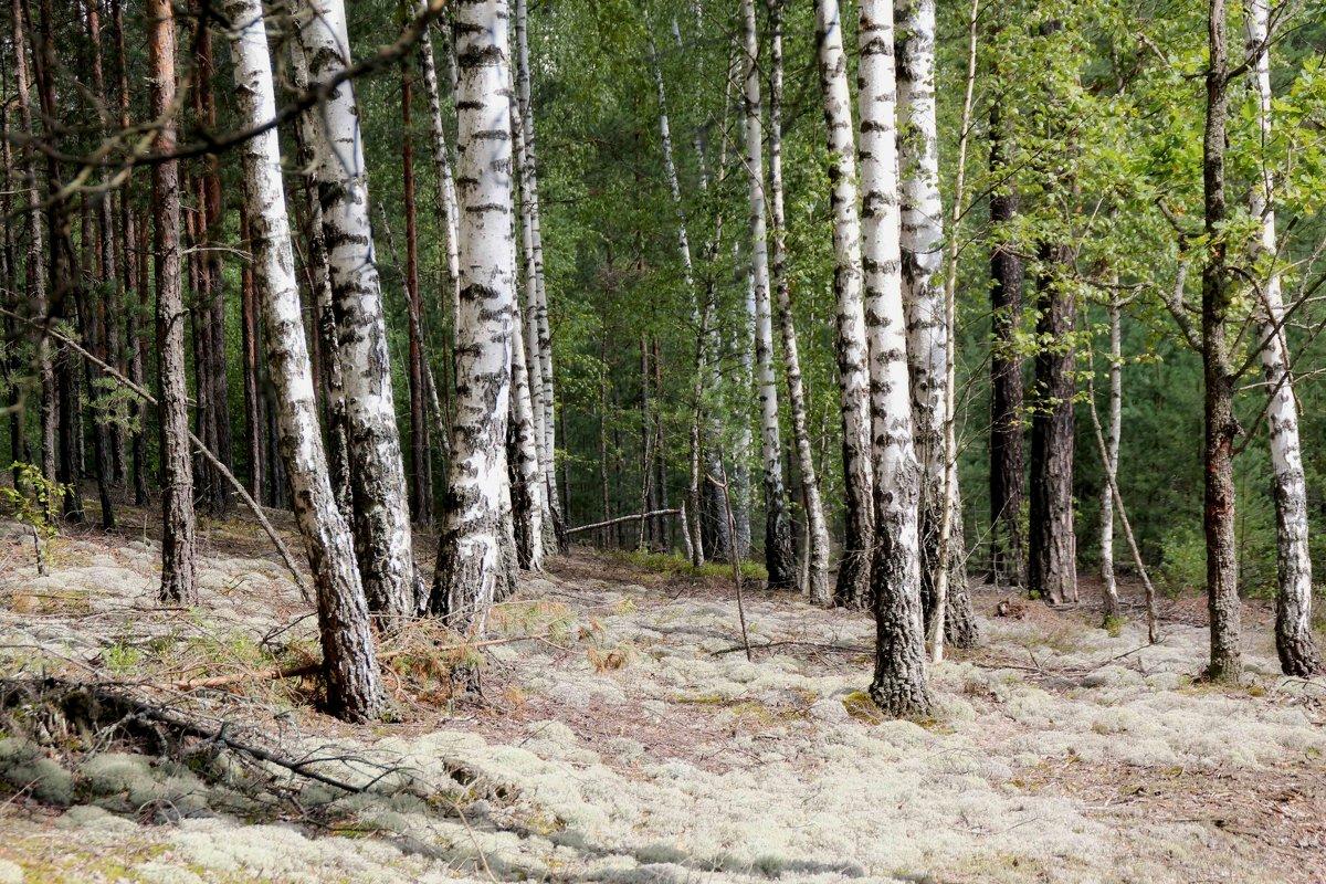 Сказочный лес. - Инна Малявина