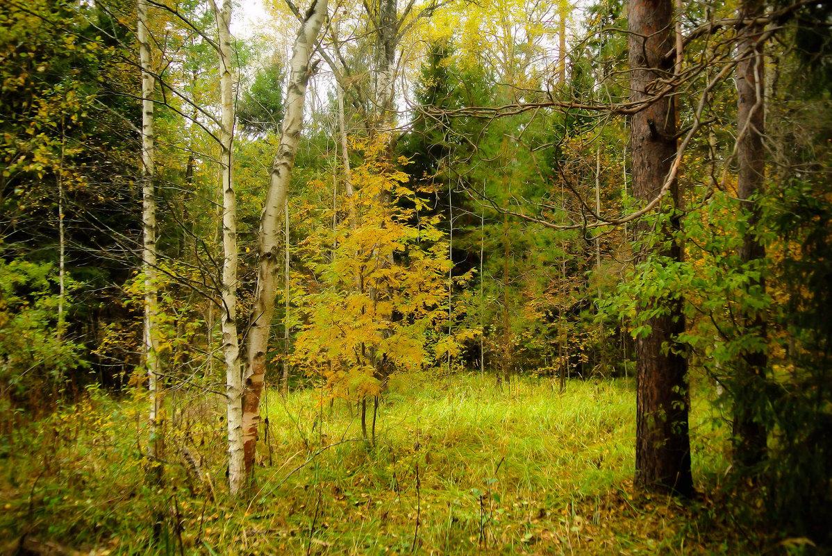 Есть в Осени первоначальной короткая,но дивная пора.. - Алла Кочергина