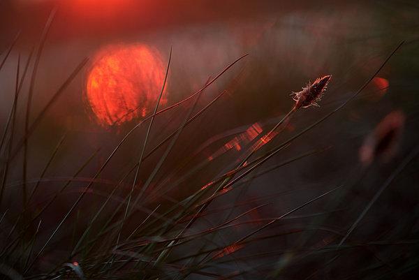 Sunrise - Zelma Brezinska