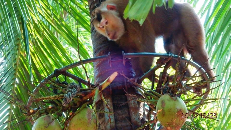 обезьяна - Таня