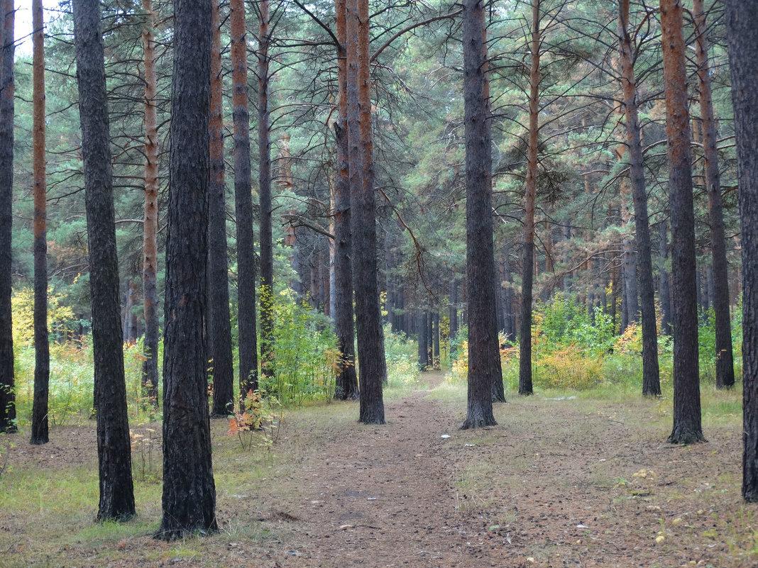 В осеннем лесу - Александр Подгорный