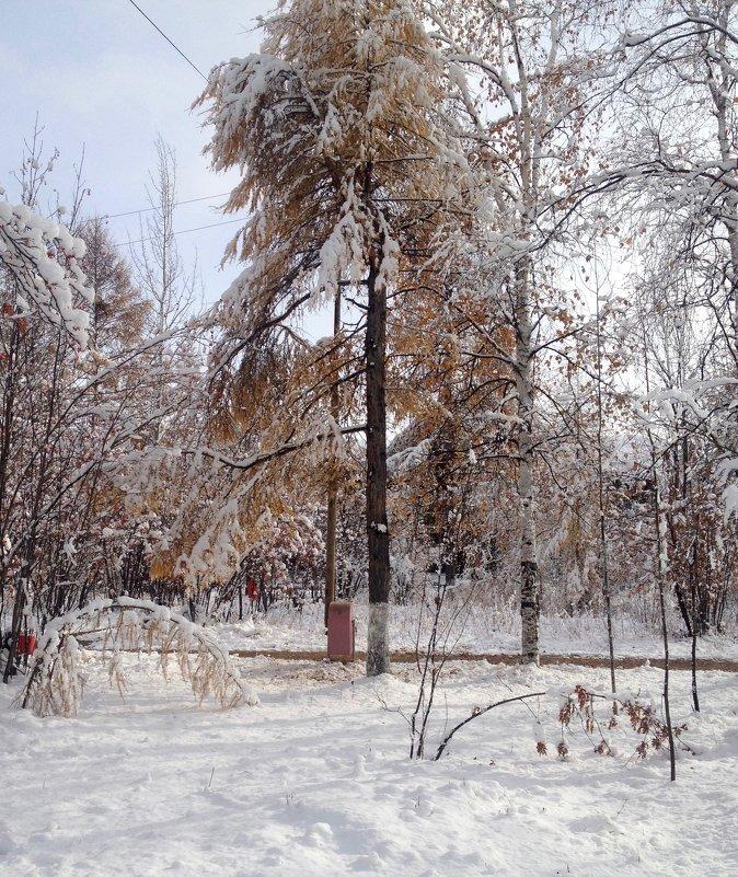 Первый снег - Василий