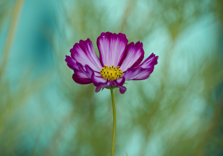 Случайный цветок - Марина