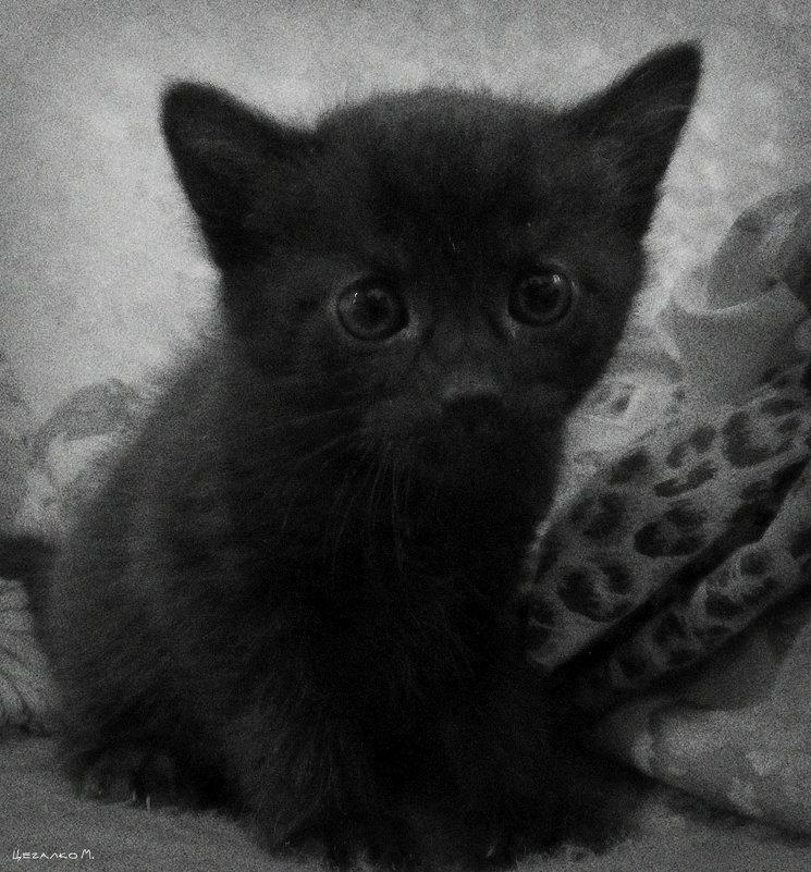 Котёнок - Михаил Цегалко