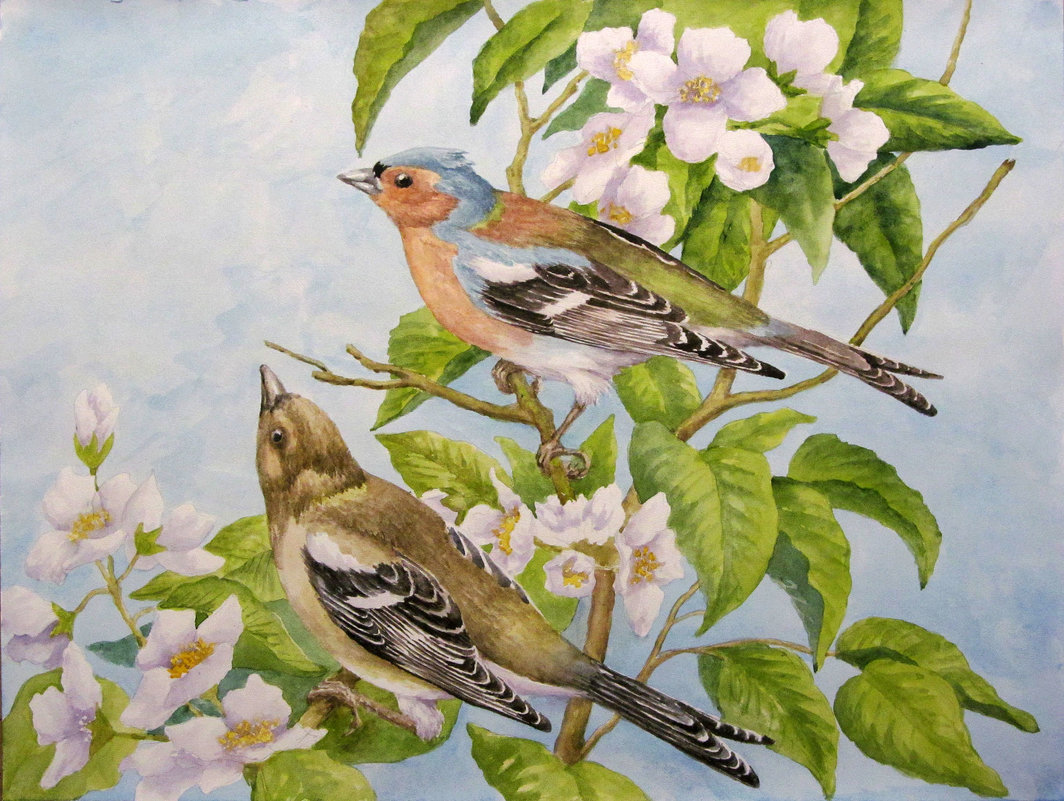 Птички ) - rv76