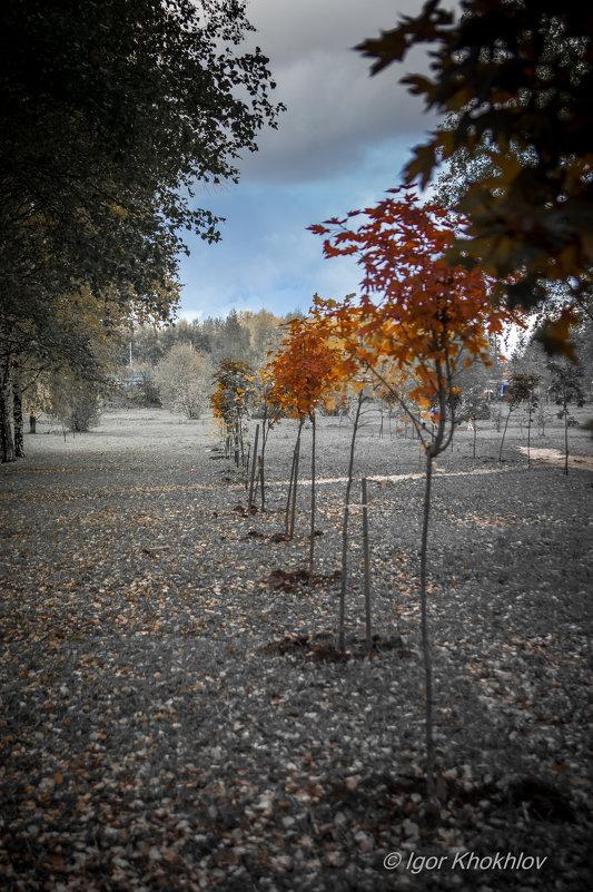 Осень. Цвет уходит - Игорь Хохлов