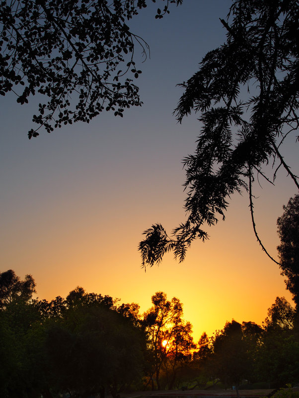 Закат в парке - Alex Molodetsky