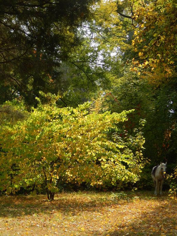 В лесу... ОСЕНЬ - Татьяна