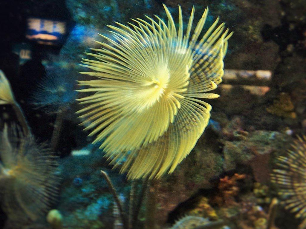 медуза - kuta75 оля оля