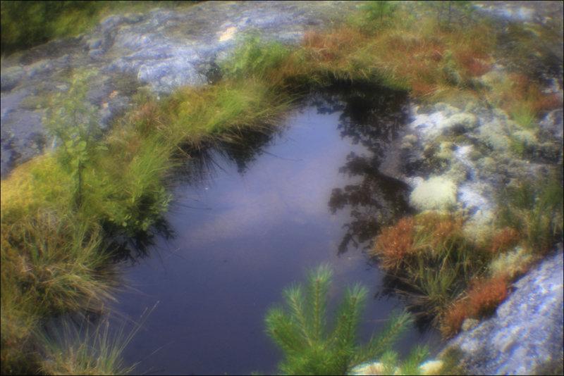 Северные краски - galina bronnikova
