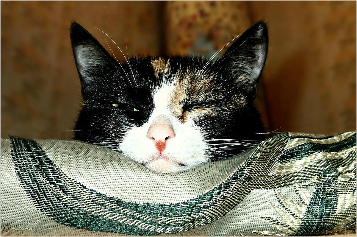 Портрет моей спящей кошки... - Кай-8 (Ярослав) Забелин