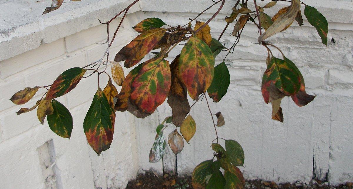 Осень на белом - Галина Бобкина