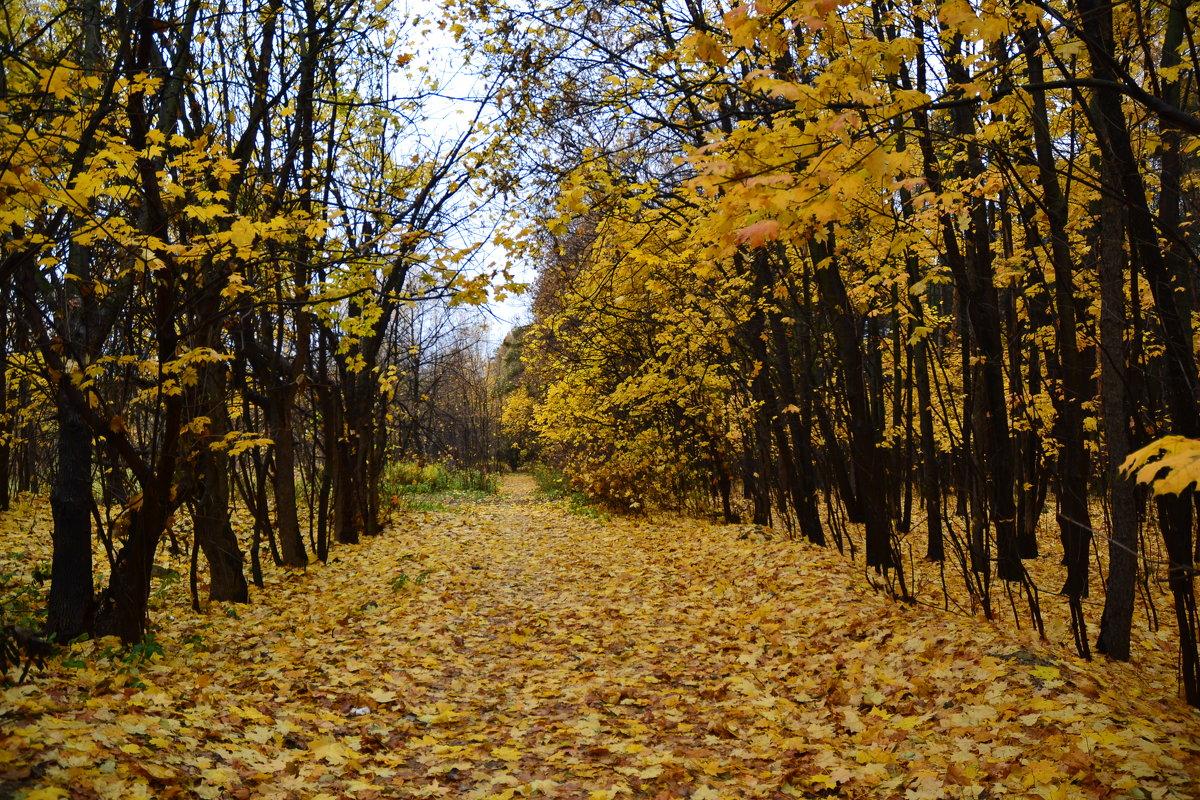Осень, она не спросит... - Александр Филатов