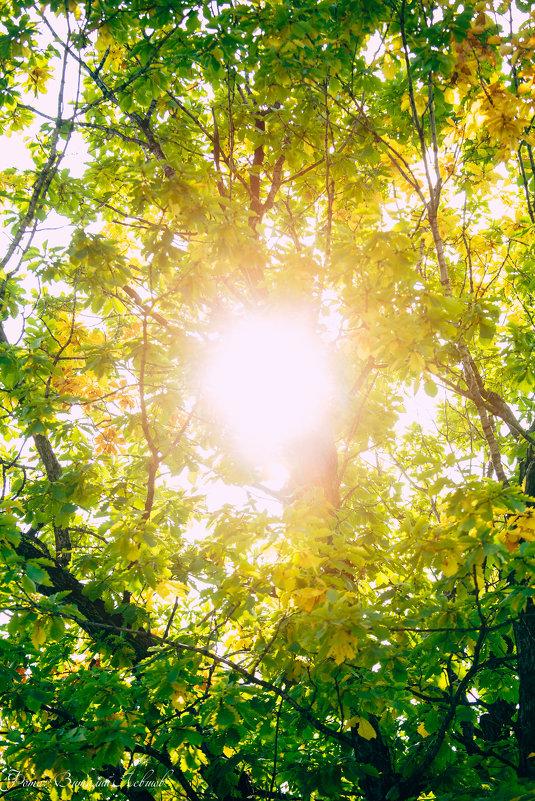 Осень входит в лес... - Виталий Левшов