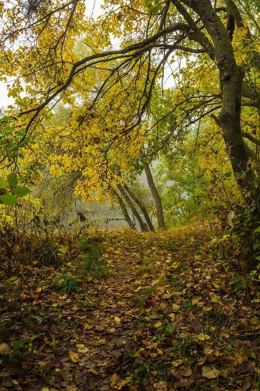 Желтая осень - Сергей Корнев