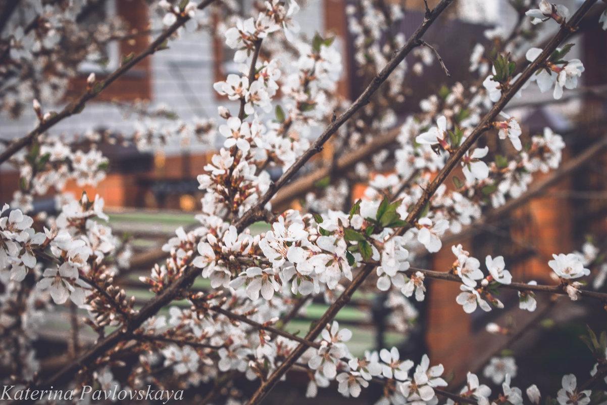 весна - Катерина