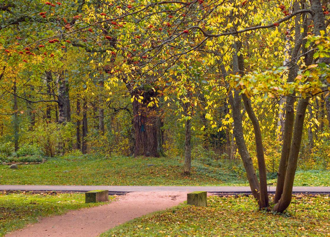 В осеннем парке 3 - Виталий