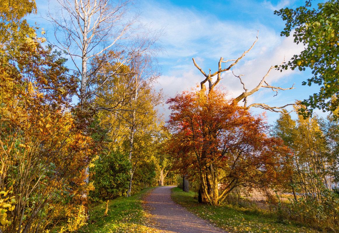 В осеннем парке - Виталий