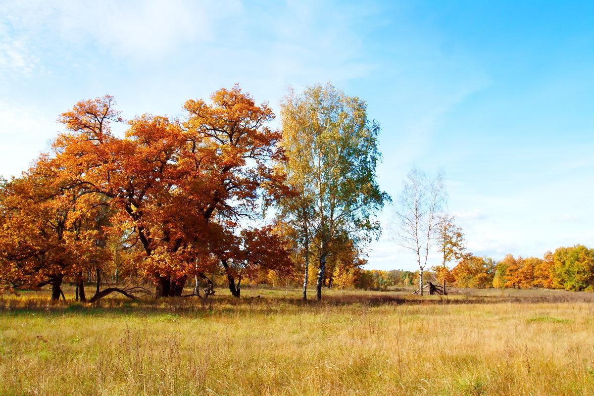 осенний пейзаж - Андрей Дружинин