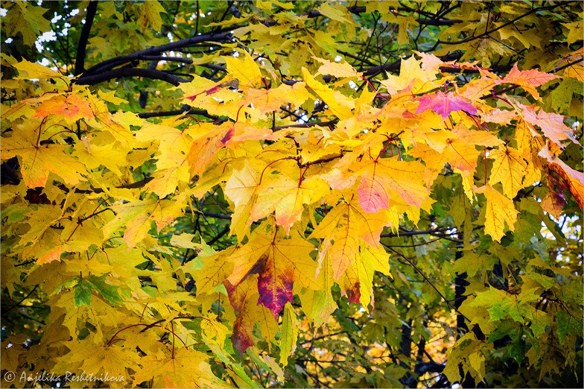 Осенний наряд - Anjelika Reshetnikova