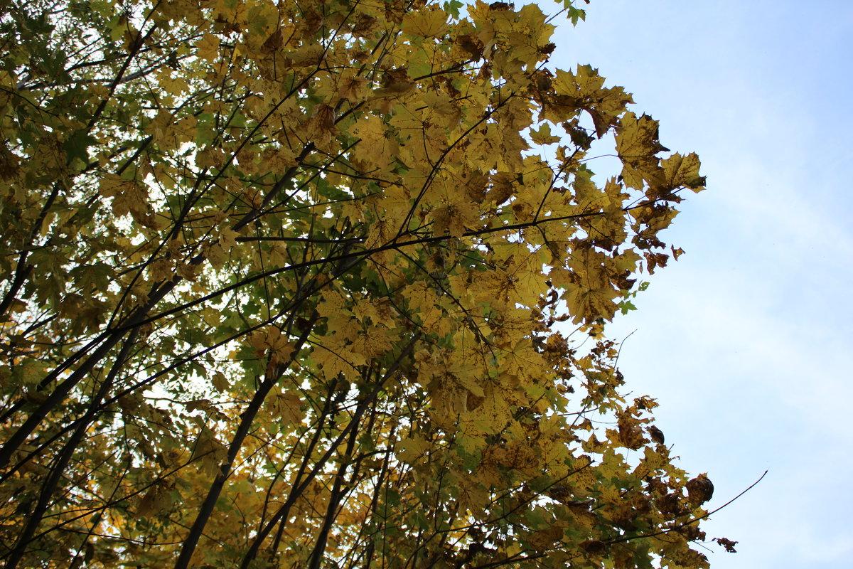 Осенний листопад - Татьяна