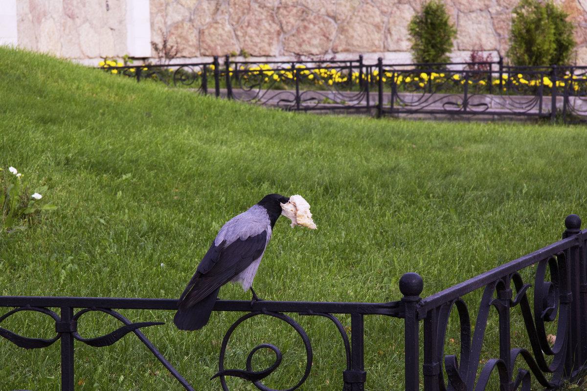 Ворона с лавашом - Aнна Зарубина