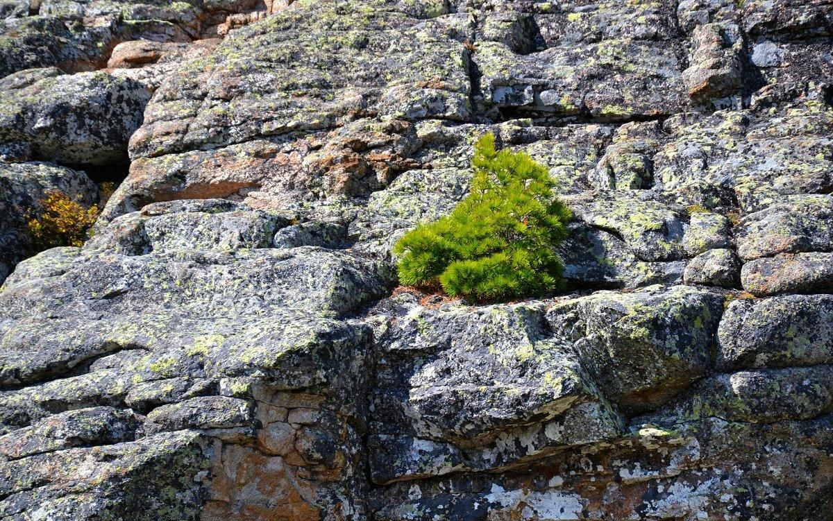 И на камнях растут деревья - Милешкин Владимир Алексеевич