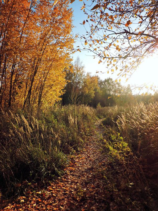 Золотая Осень - Анастасия Фёдорова