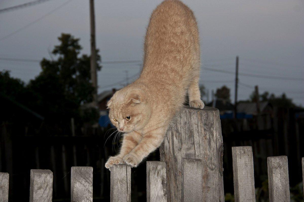 Соседский  кот - Виктор