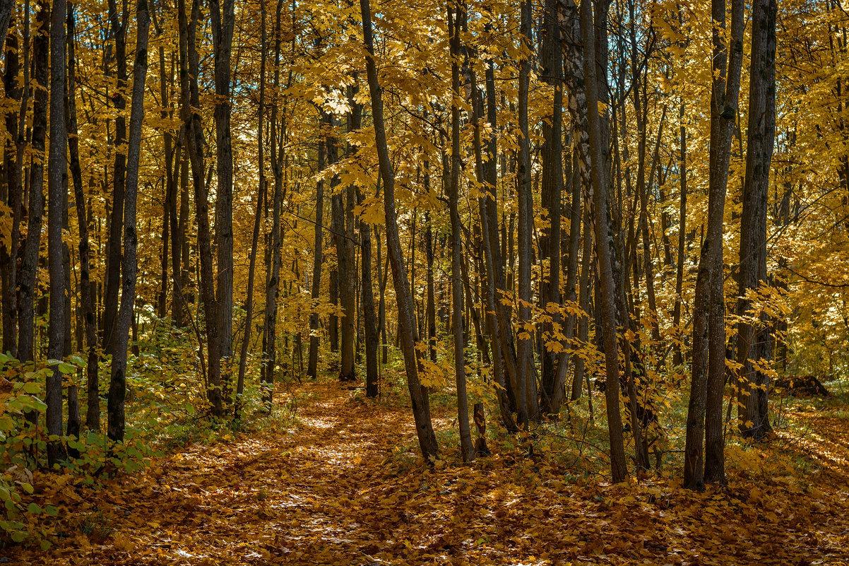 Осенний лес - Алексей Вольтов