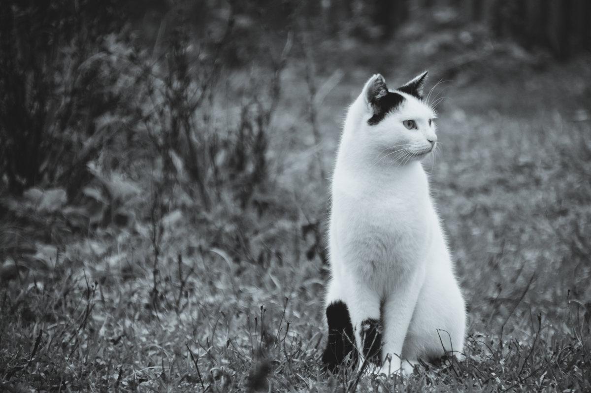 кот который не хочет сниматься - Тася Тыжфотографиня