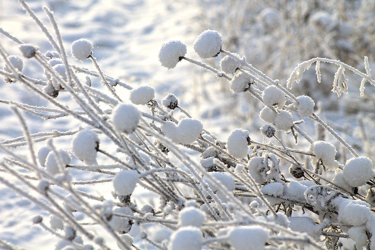 Цветы зимы - Екатерина Торганская