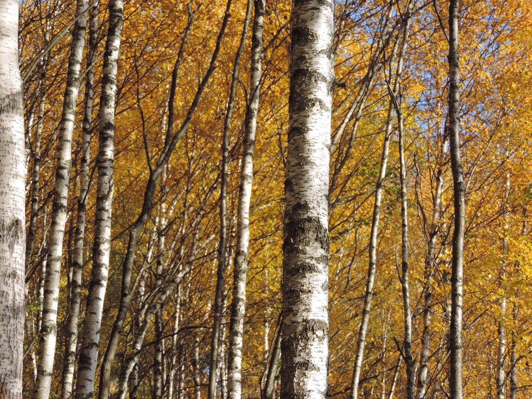 Золотая осень - Елена Якушина