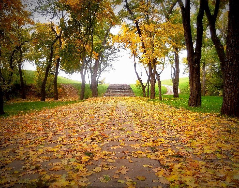 По дороге к осени - оксана косатенко