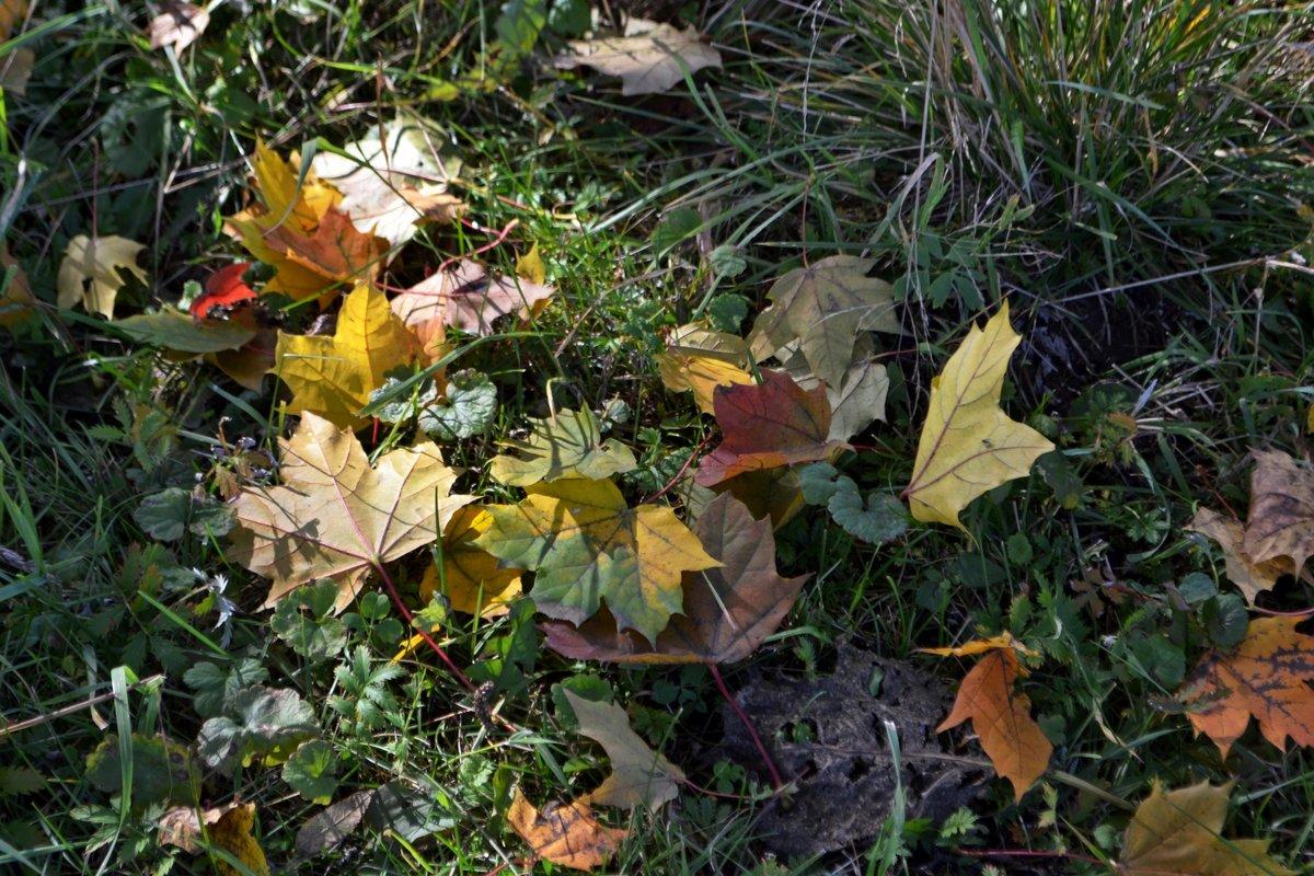 Кленовые листья - Людмила Якимова