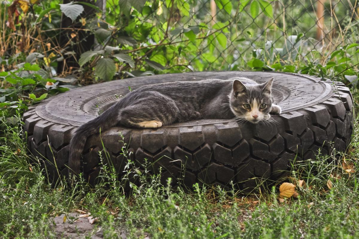 Бортировка колес, кошкам вне очереди ... ! - Ольга Винницкая