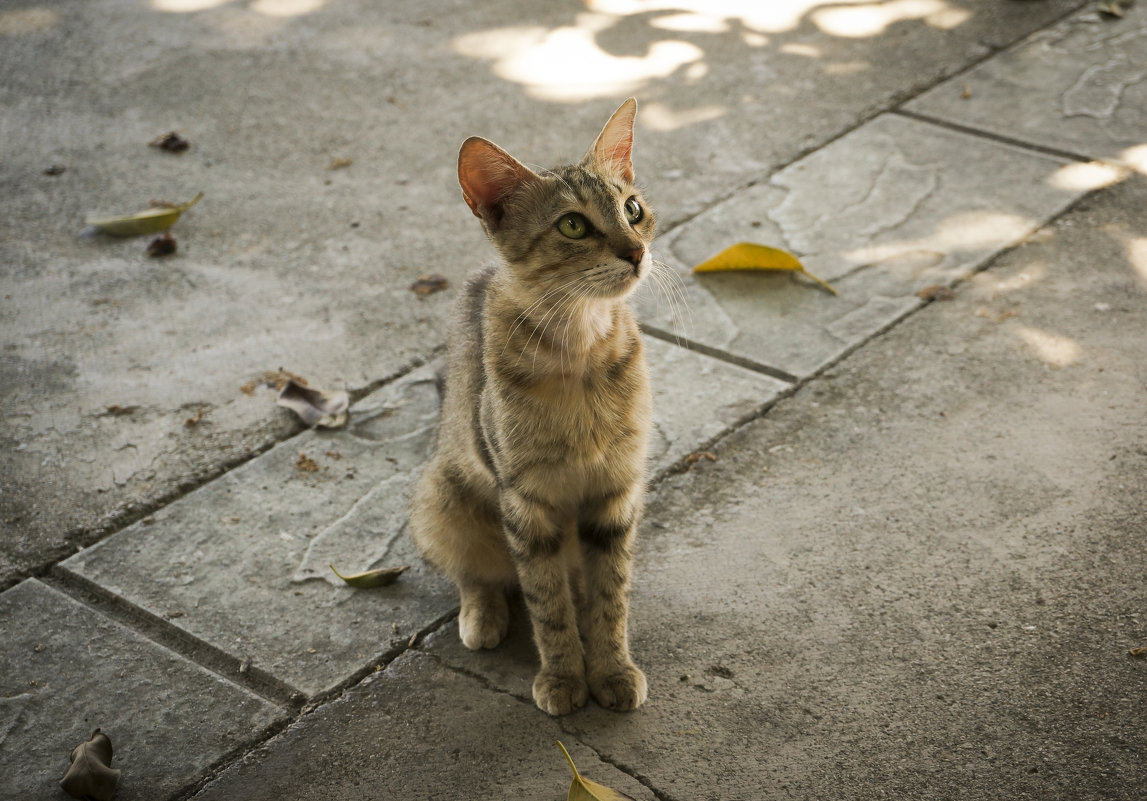 Meow - Milena WeirdDark