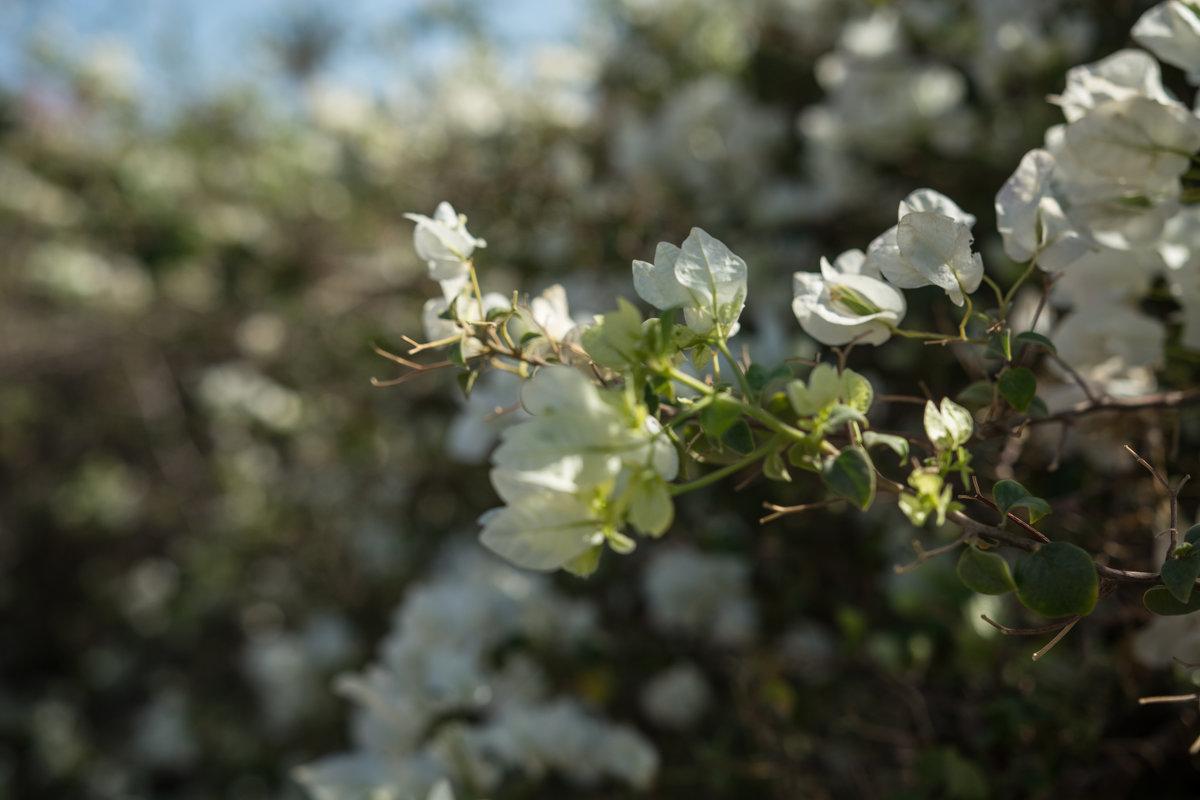 цветы - Анастасия Садовская