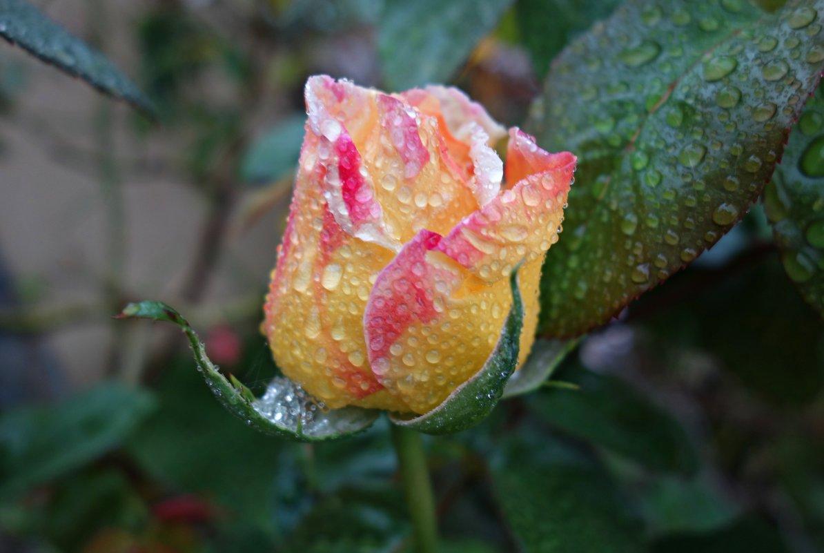 """""""Дождь осенний моросит, С листьев капельки слетают..."""" - Galina Dzubina"""