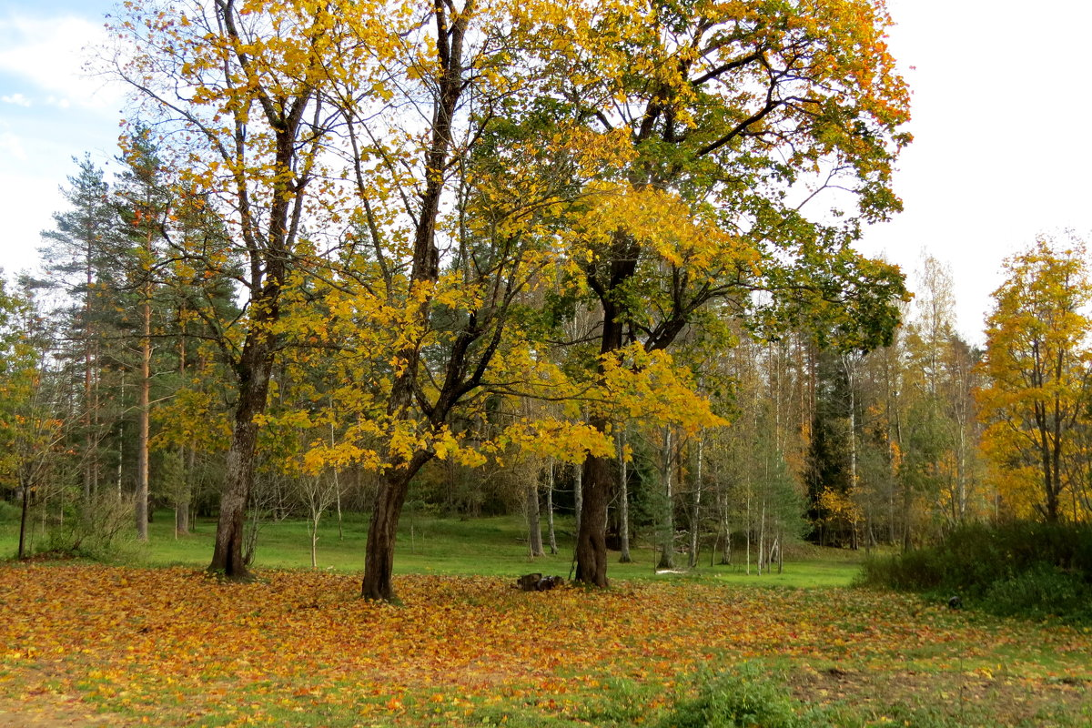 Осенняя пора - Светлана