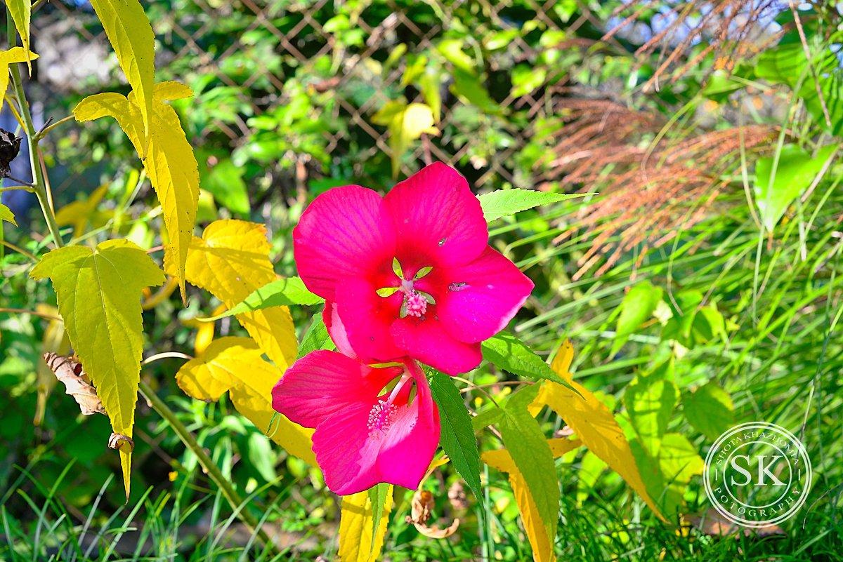 просто цветок - shota